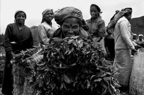 Le donne del tè a Nuwara Eliya