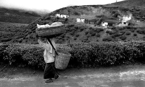 Le abitazioni nella piantagioni di tè-Nuwara Eliya