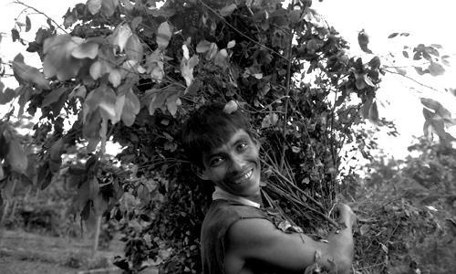 La raccolta della coca - Chapare