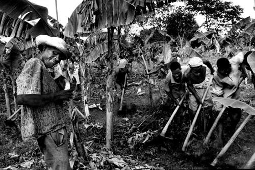 Combit il lavoro comunitario-Papaye