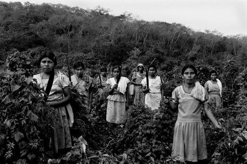 La difesa della terra-Metlatlepec-Huasteca