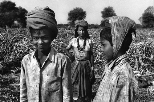 Braccianti raccolgono la canna da zucchero-Barwani-Kadarkheda-Maharashtra