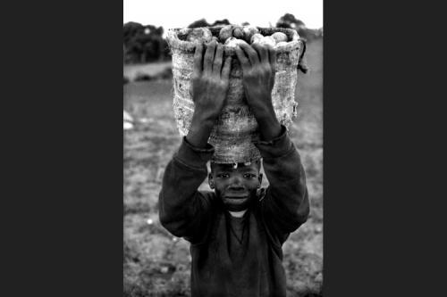 Piccolo raccoglitore di patate-Papaye